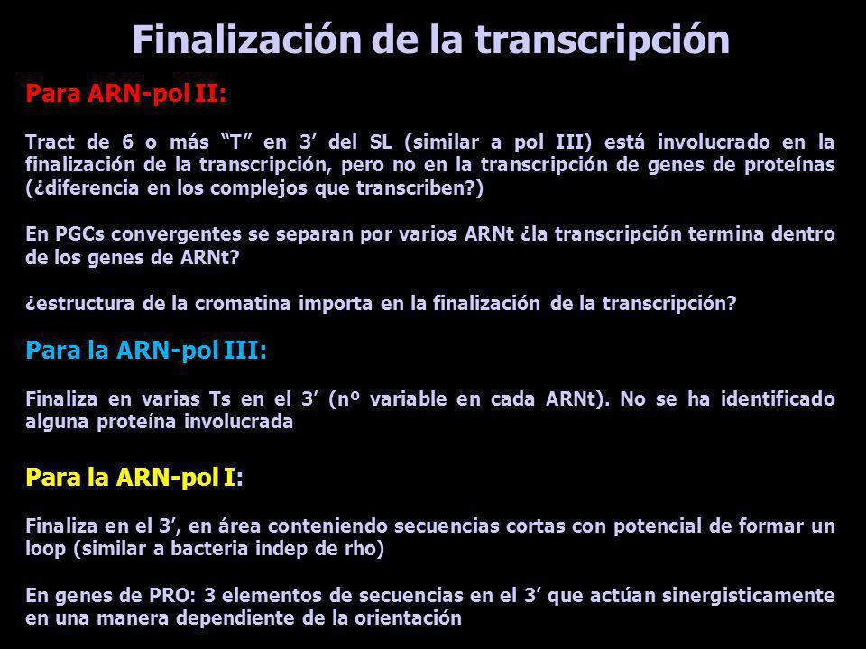 Todos los genes de un PGC son transcriptos al mismo nivel como unidad policistrónica Todos los ARNm maduros comienzan con la misma secuencia de 30- 40 nt -> miniexon (ME - SL) Esa secuencia no se encuentra en las vecindades del gen que está siendo analizado Existen 100-200 genes para ME por núcleo en tandem c/u está presente en un repetido de aprox 1,3 kb Su transcripto presenta Cap 4 (m7G, metilaciones 2OH ribosas 1-4 y metilaciones en las bases 1 y 4) y es monocistrónico Qué se sabe sobre los pre-ARNm