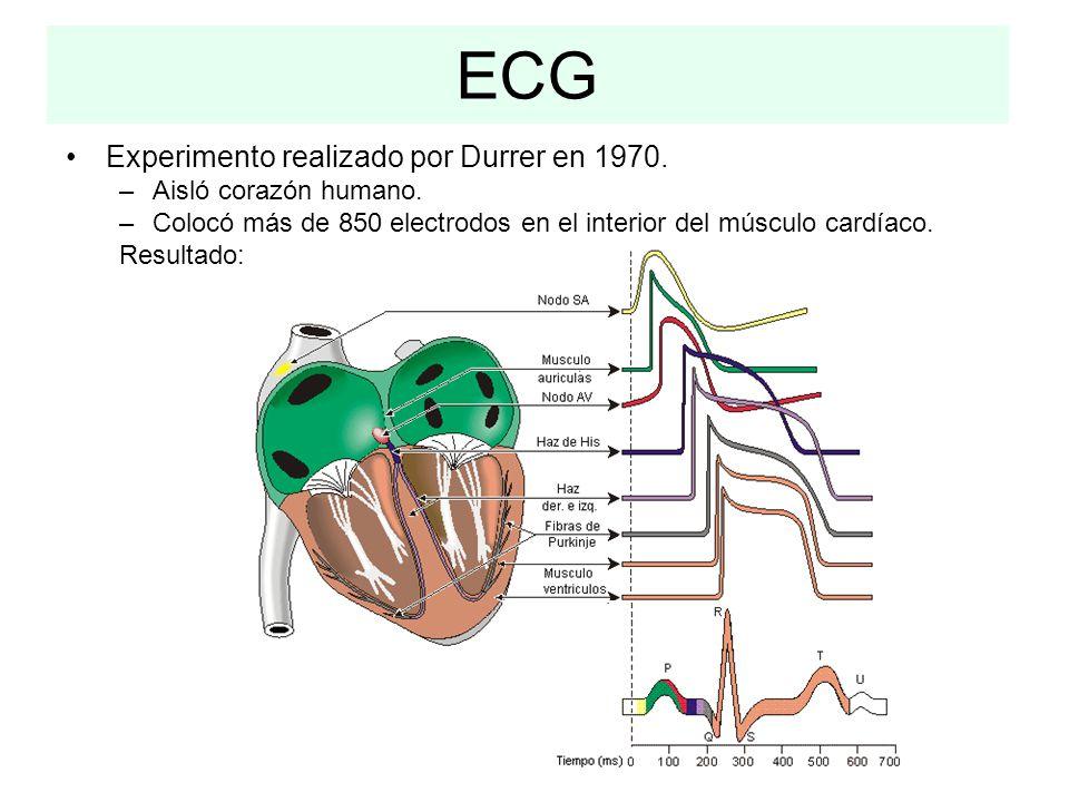 ECG Experimento realizado por Durrer en 1970. –Aisló corazón humano. –Colocó más de 850 electrodos en el interior del músculo cardíaco. Resultado: