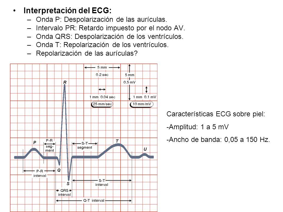 Interpretación del ECG: –Onda P: Despolarización de las aurículas. –Intervalo PR: Retardo impuesto por el nodo AV. –Onda QRS: Despolarización de los v