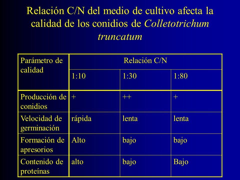 Relación C/N del medio de cultivo afecta la calidad de los conidios de Colletotrichum truncatum Parámetro de calidad Relación C/N 1:101:301:80 Producc