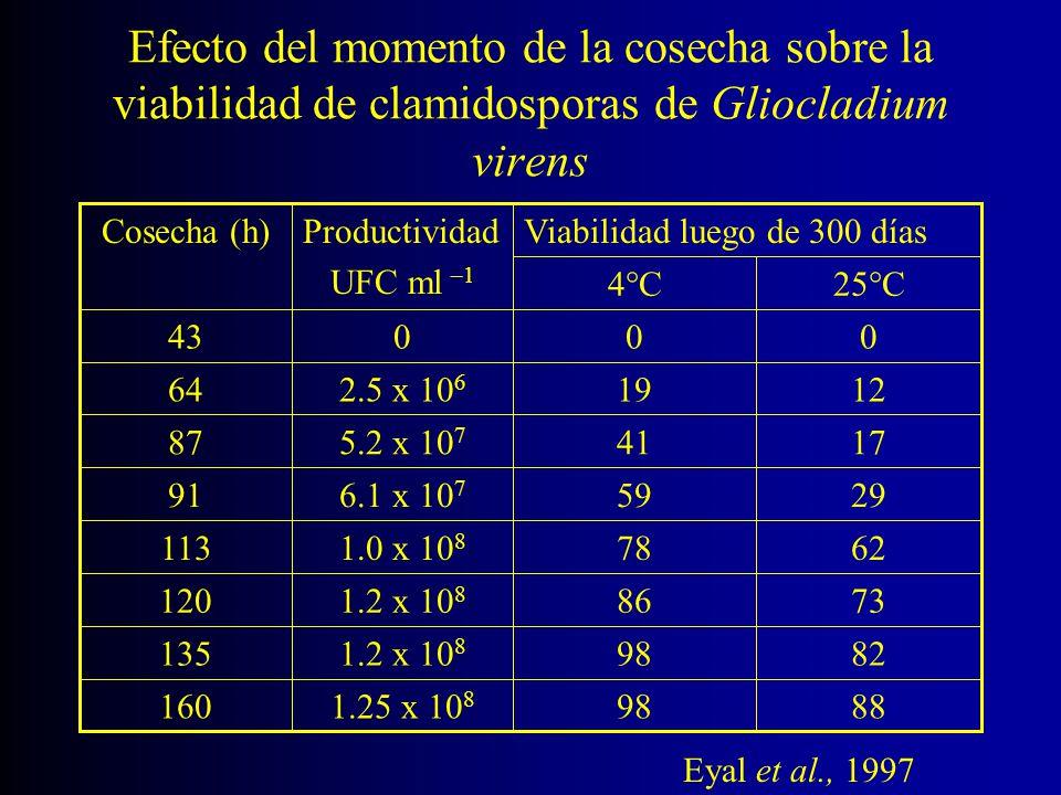 Efecto del momento de la cosecha sobre la viabilidad de clamidosporas de Gliocladium virens 25 C4 C 88981.25 x 10 8 160 82981.2 x 10 8 135 73861.2 x 1