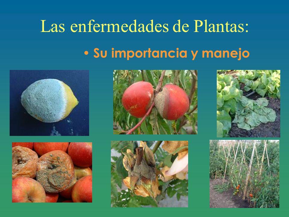 Las enfermedades de Plantas: Su importancia y manejo