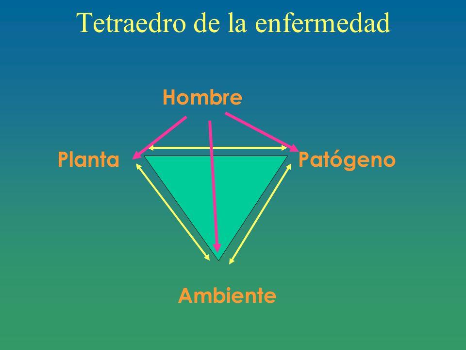 Tetraedro de la enfermedad Hombre Planta Patógeno Ambiente