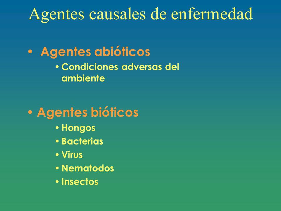 Agentes causales de enfermedad Agentes abióticos Condiciones adversas del ambiente Agentes bióticos Hongos Bacterias Virus Nematodos Insectos