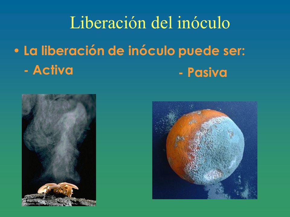 Liberación del inóculo La liberación de inóculo puede ser: - Activa - Pasiva
