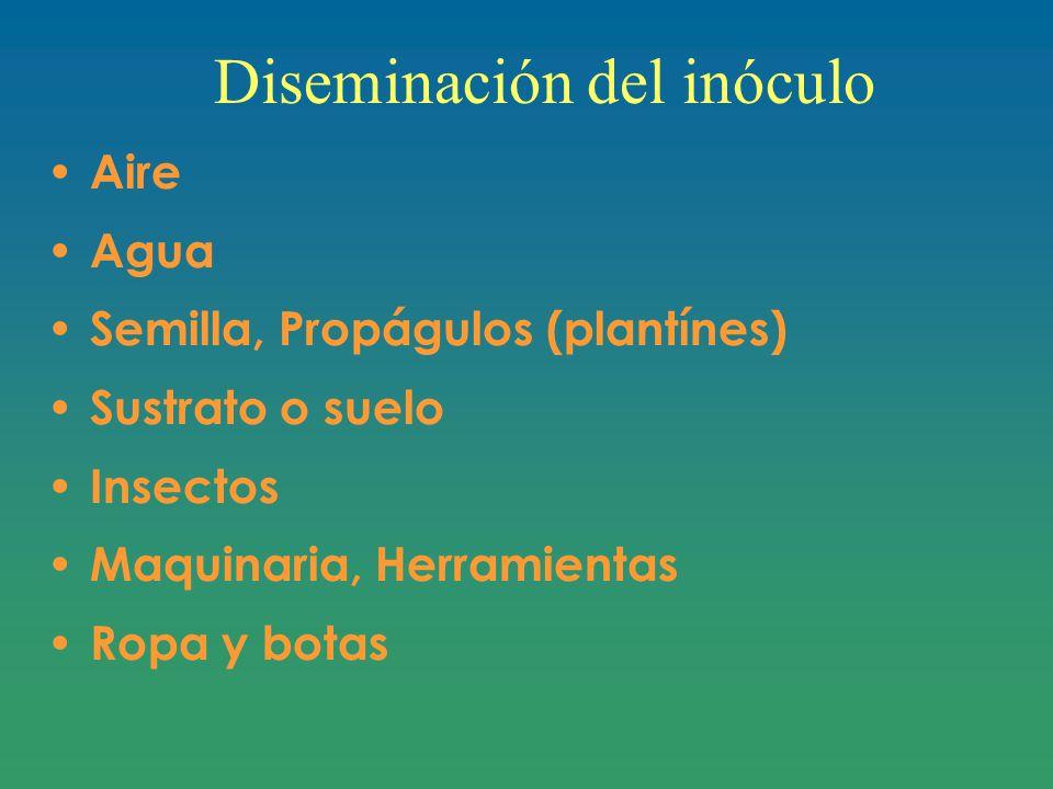 Diseminación del inóculo Aire Agua Semilla, Propágulos (plantínes) Sustrato o suelo Insectos Maquinaria, Herramientas Ropa y botas