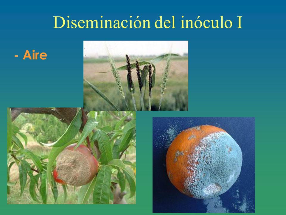 Diseminación del inóculo I - Aire