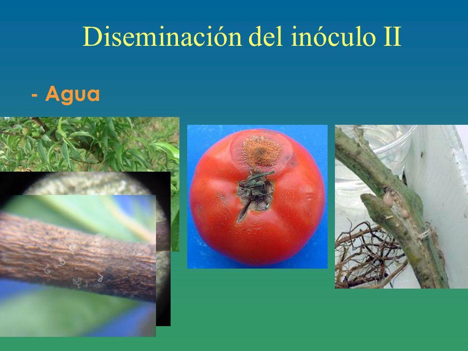 Diseminación del inóculo II - Agua