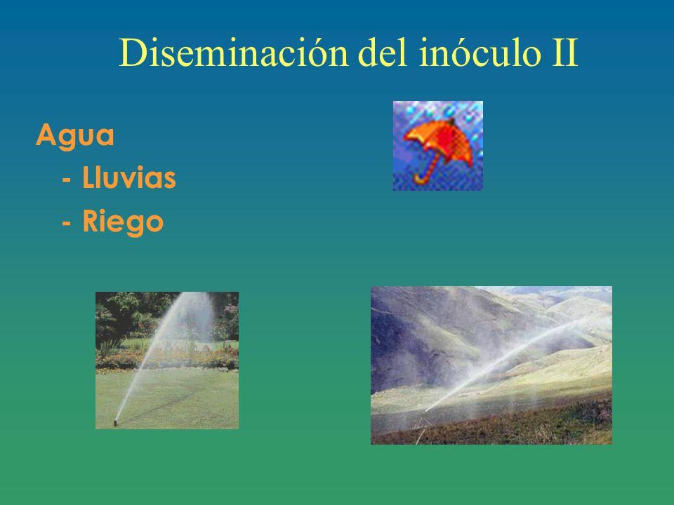 Diseminación del inóculo II Agua - Lluvias - Riego