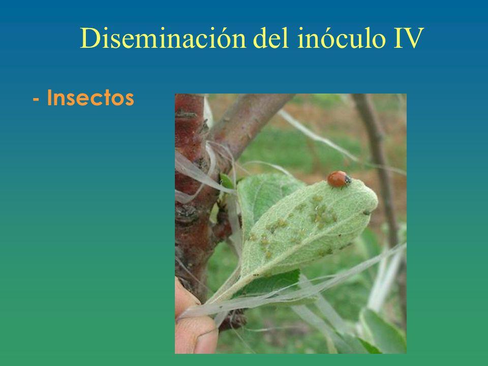 Diseminación del inóculo IV - Insectos