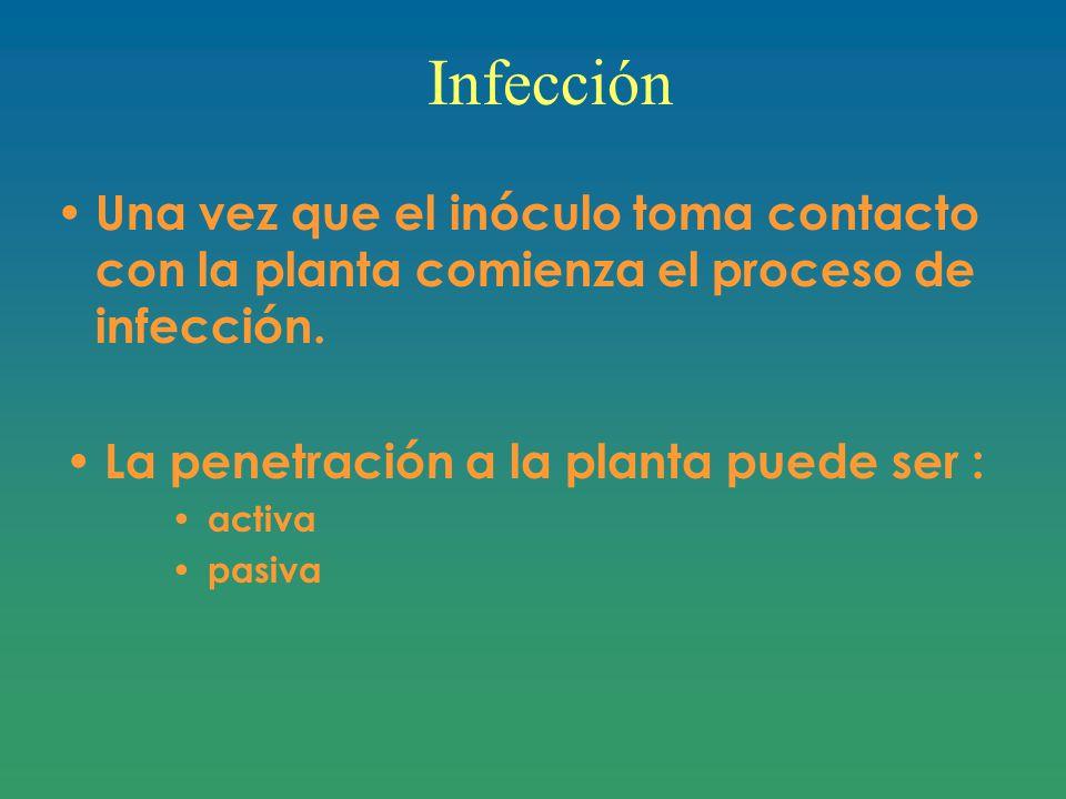 Infección Una vez que el inóculo toma contacto con la planta comienza el proceso de infección.