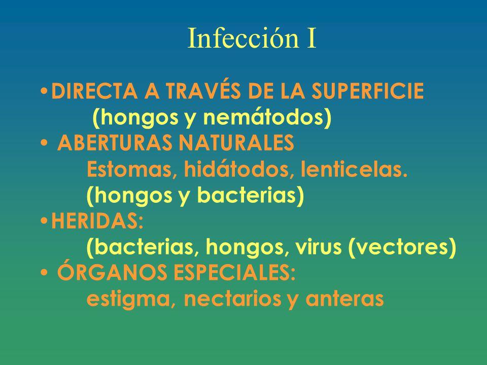 Infección I DIRECTA A TRAVÉS DE LA SUPERFICIE (hongos y nemátodos) ABERTURAS NATURALES Estomas, hidátodos, lenticelas.