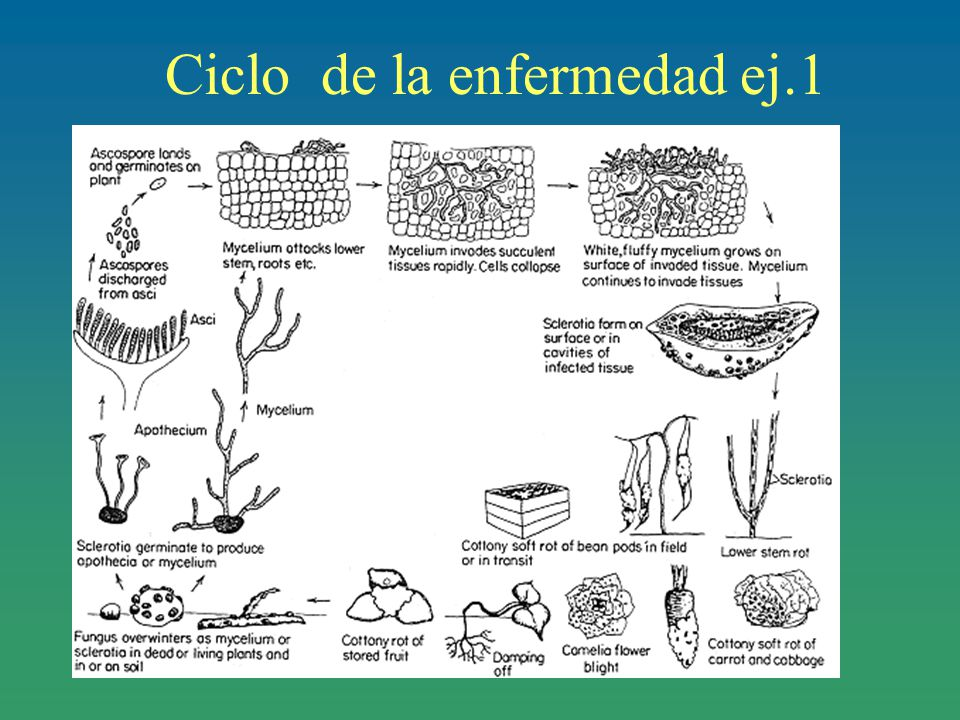Ciclo de la enfermedad ej.1