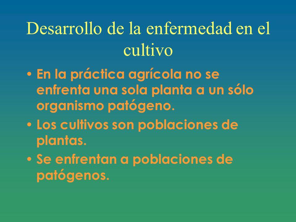 Desarrollo de la enfermedad en el cultivo En la práctica agrícola no se enfrenta una sola planta a un sólo organismo patógeno.