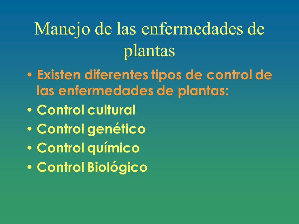 Manejo de las enfermedades de plantas Existen diferentes tipos de control de las enfermedades de plantas: Control cultural Control genético Control químico Control Biológico
