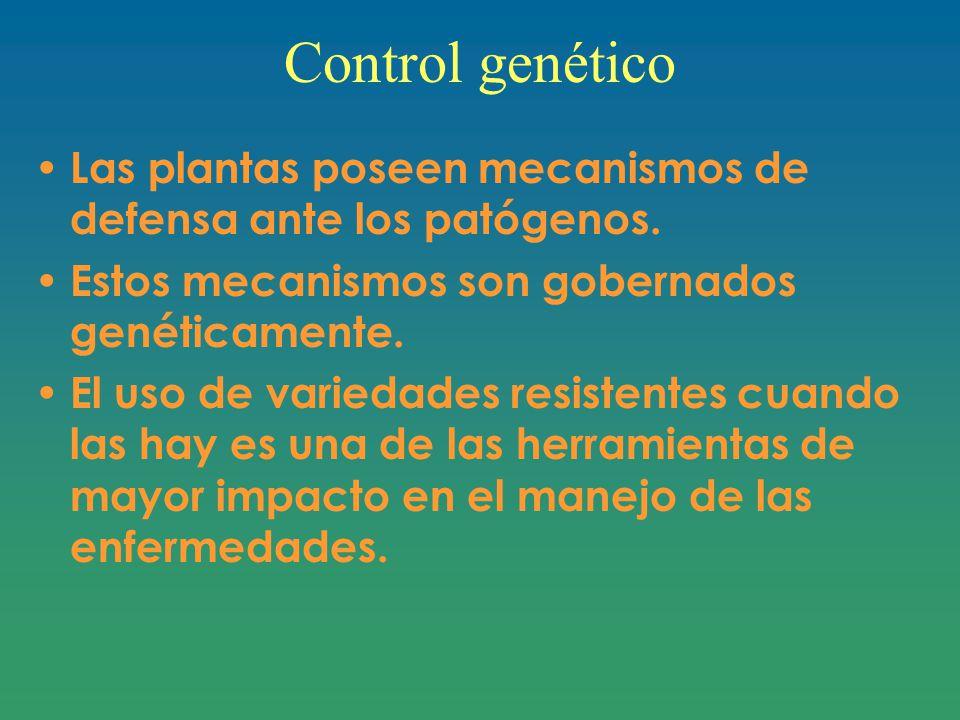 Control genético Las plantas poseen mecanismos de defensa ante los patógenos.