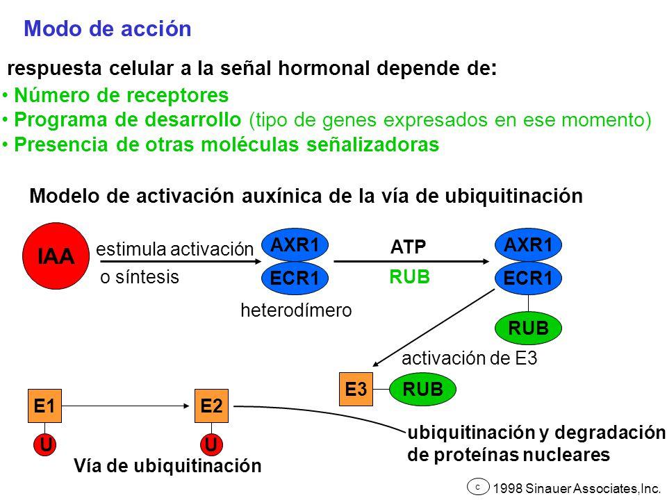 Modo de acción respuesta celular a la señal hormonal depende de : Número de receptores Programa de desarrollo (tipo de genes expresados en ese momento