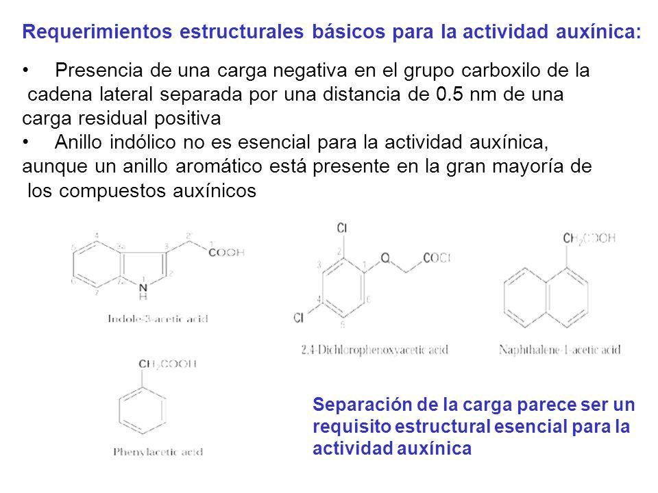 Requerimientos estructurales básicos para la actividad auxínica: Presencia de una carga negativa en el grupo carboxilo de la cadena lateral separada p