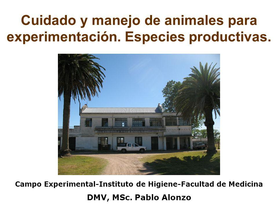 Cuidado y manejo de animales para experimentación.