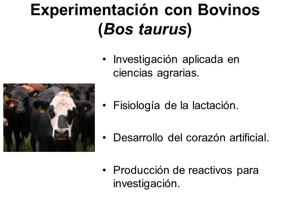 Experimentación con Bovinos (Bos taurus) Investigación aplicada en ciencias agrarias.