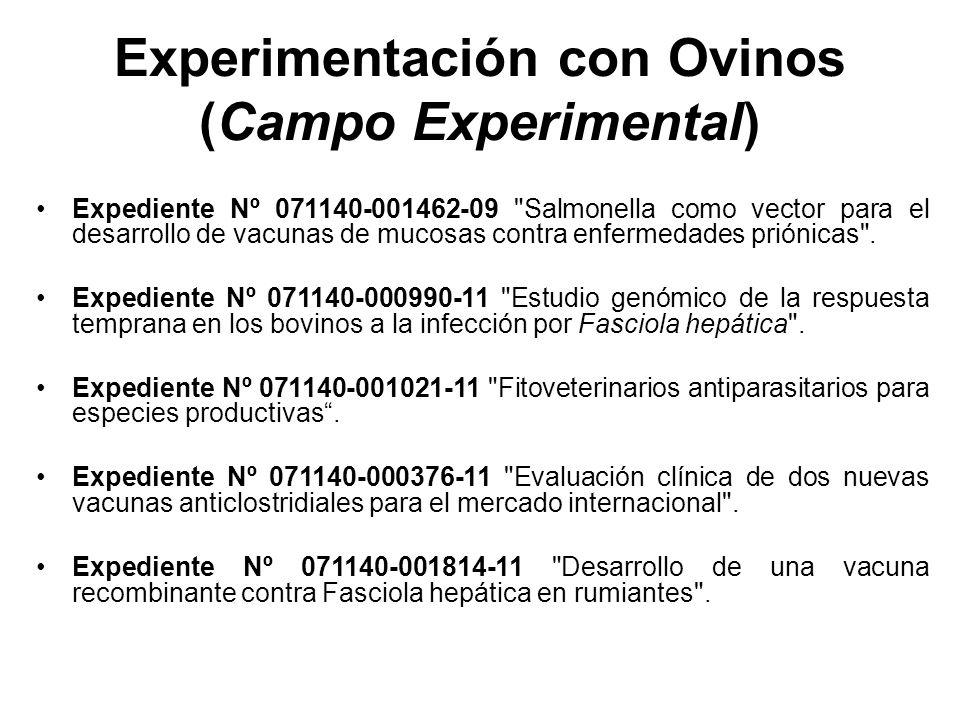 Experimentación con Ovinos (Campo Experimental) Expediente Nº 071140-001462-09 Salmonella como vector para el desarrollo de vacunas de mucosas contra enfermedades priónicas .