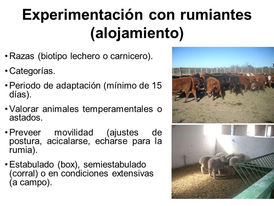 Experimentación con rumiantes (alojamiento) Razas (biotipo lechero o carnicero).