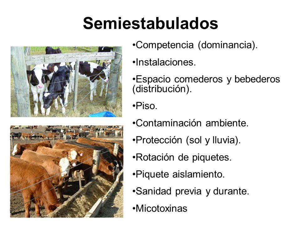 Semiestabulados Competencia (dominancia).Instalaciones.