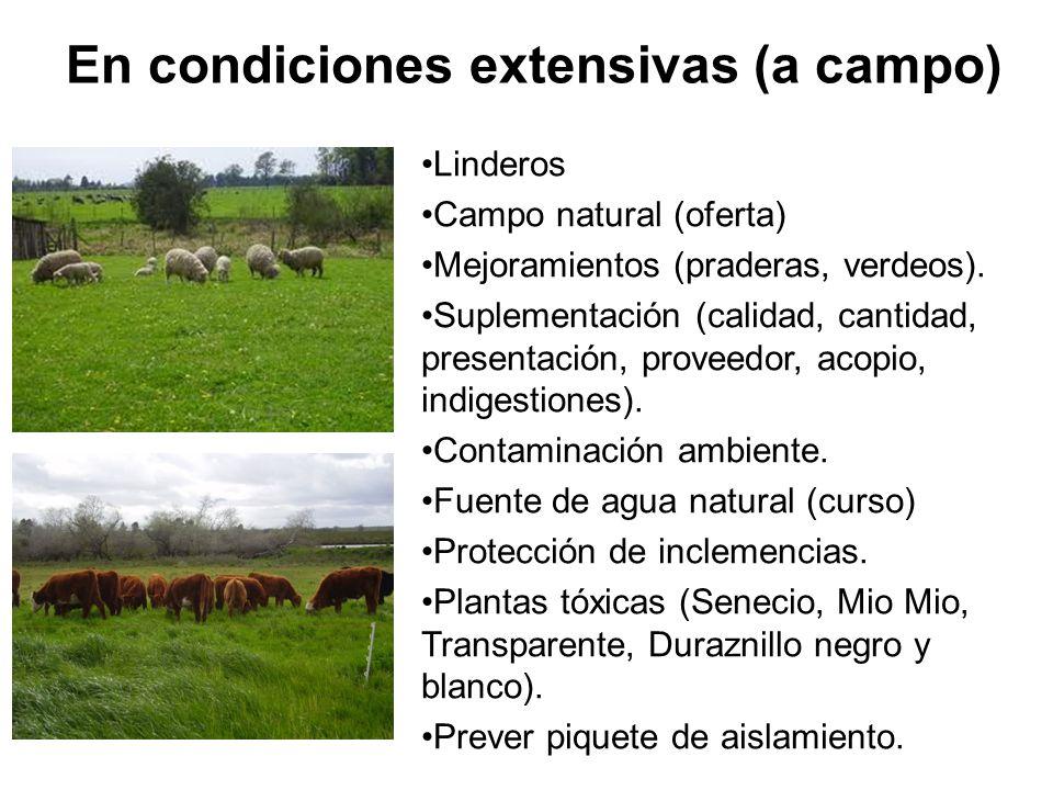 En condiciones extensivas (a campo) Linderos Campo natural (oferta) Mejoramientos (praderas, verdeos).