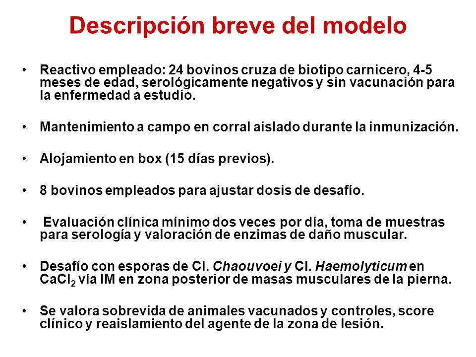 Descripción breve del modelo Reactivo empleado: 24 bovinos cruza de biotipo carnicero, 4-5 meses de edad, serológicamente negativos y sin vacunación para la enfermedad a estudio.