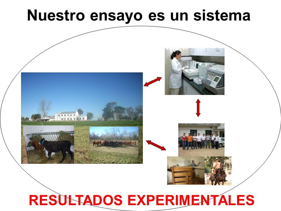 Nuestro ensayo es un sistema RESULTADOS EXPERIMENTALES