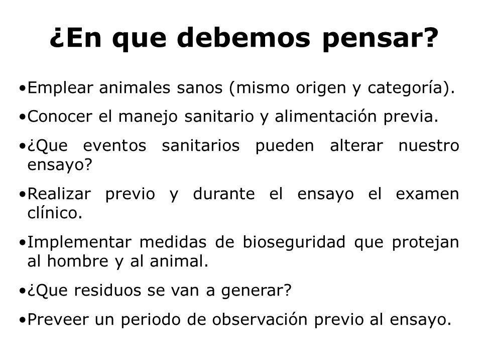 ¿En que debemos pensar.Emplear animales sanos (mismo origen y categoría).