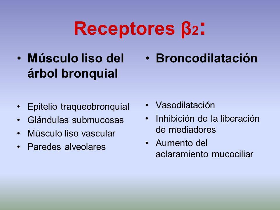 Receptores β 2 : Músculo liso del árbol bronquial Epitelio traqueobronquial Glándulas submucosas Músculo liso vascular Paredes alveolares Broncodilata