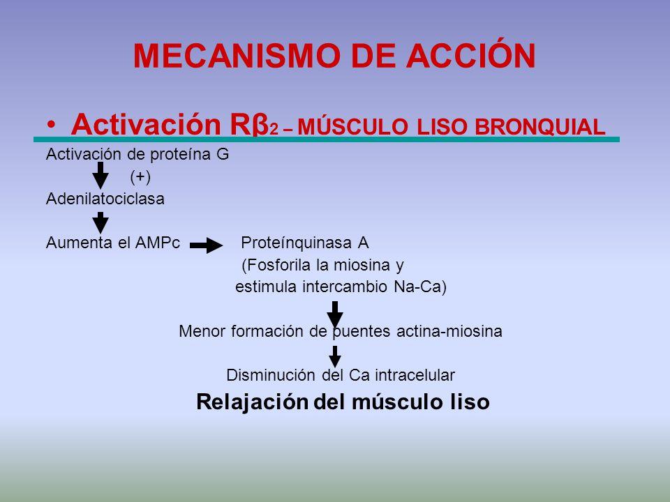 MECANISMO DE ACCIÓN Activación Rβ 2 – MÚSCULO LISO BRONQUIAL Activación de proteína G (+) Adenilatociclasa Aumenta el AMPc Proteínquinasa A (Fosforila