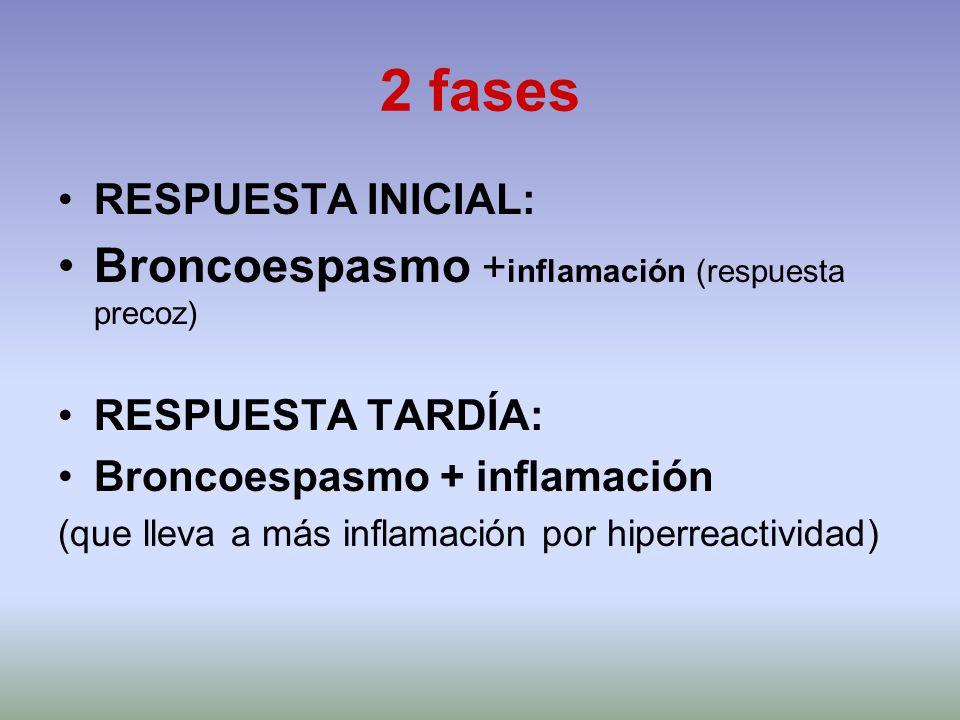 2 fases RESPUESTA INICIAL: Broncoespasmo + inflamación (respuesta precoz) RESPUESTA TARDÍA: Broncoespasmo + inflamación (que lleva a más inflamación p
