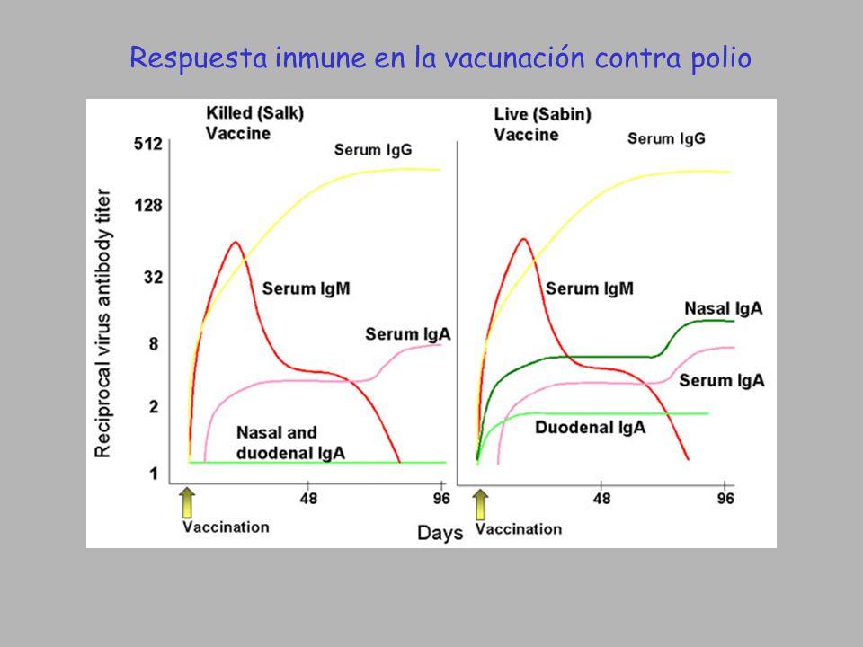 Respuesta inmune en la vacunación contra polio
