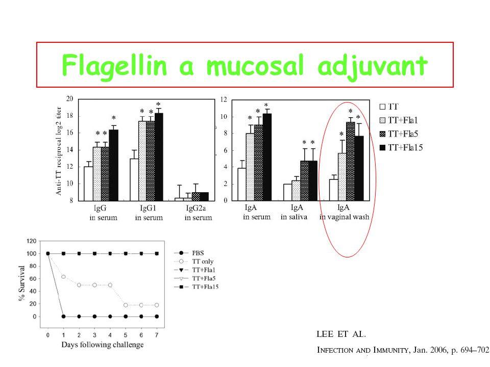 Flagellin a mucosal adjuvant