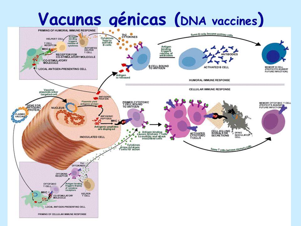 Vacunas génicas ( DNA vaccines )