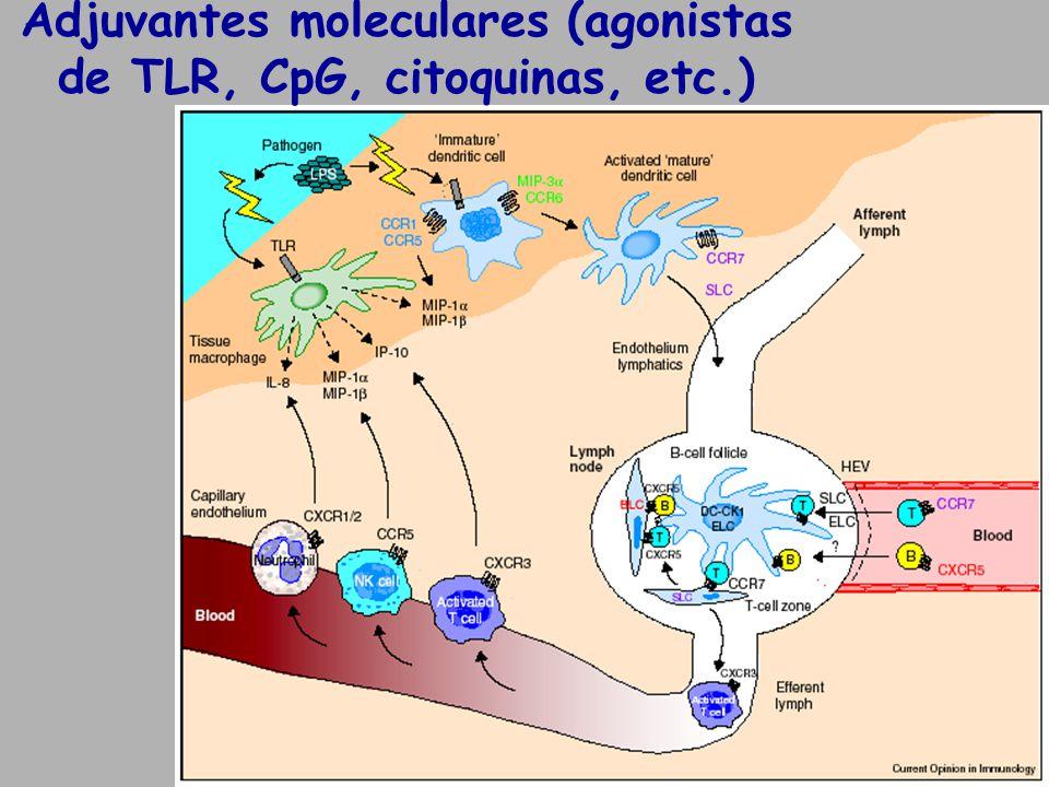 Adjuvantes moleculares (agonistas de TLR, CpG, citoquinas, etc.)
