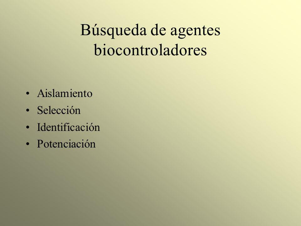 Búsqueda de agentes biocontroladores Aislamiento Selección Identificación Potenciación