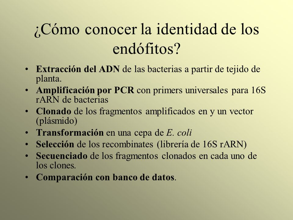 ¿Cómo conocer la identidad de los endófitos? Extracción del ADN de las bacterias a partir de tejido de planta. Amplificación por PCR con primers unive