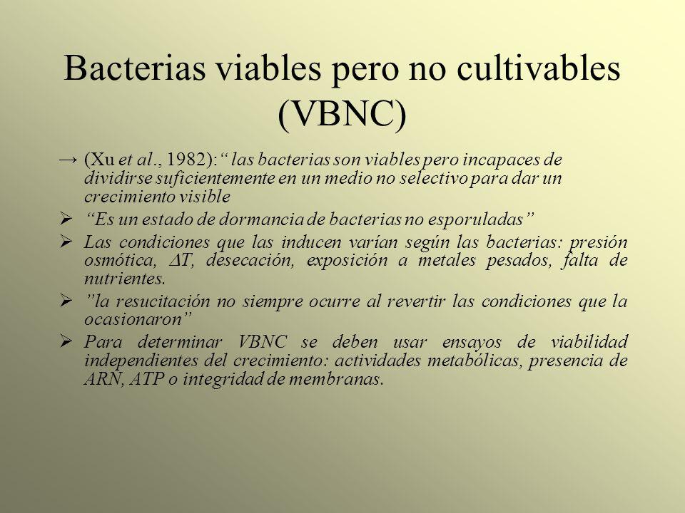 Bacterias viables pero no cultivables (VBNC) (Xu et al., 1982): las bacterias son viables pero incapaces de dividirse suficientemente en un medio no s