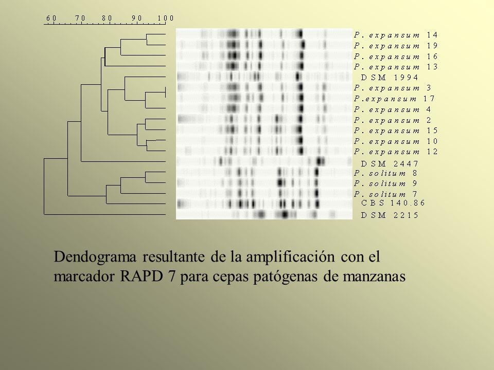Dendograma resultante de la amplificación con el marcador RAPD 7 para cepas patógenas de manzanas