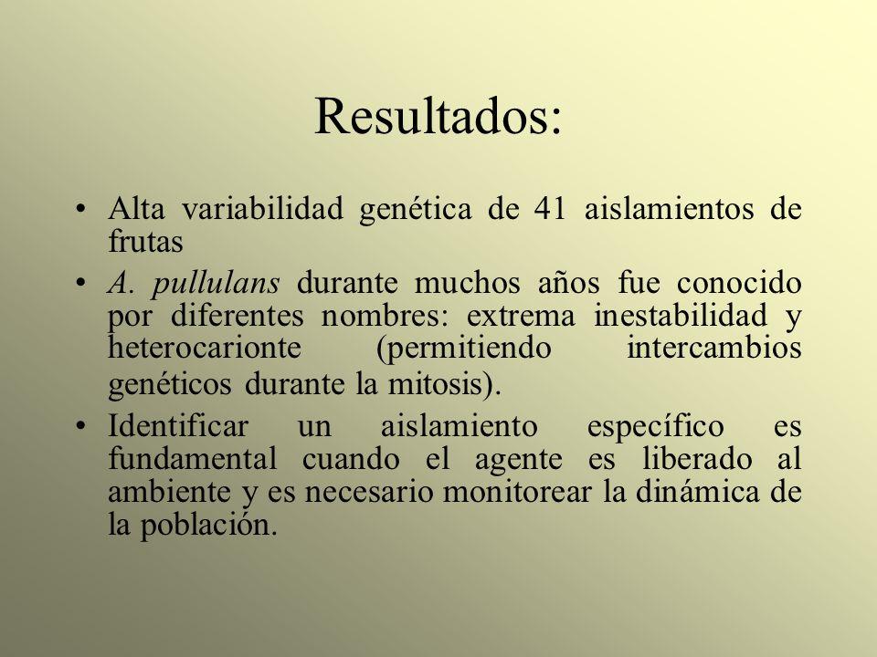 Resultados: Alta variabilidad genética de 41 aislamientos de frutas A. pullulans durante muchos años fue conocido por diferentes nombres: extrema ines