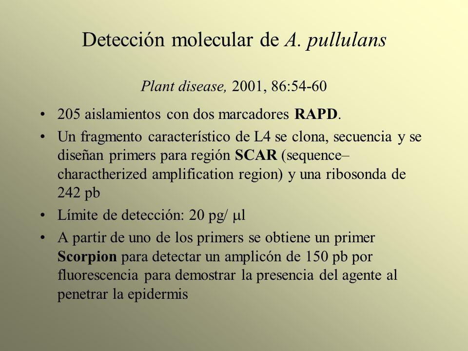 Detección molecular de A. pullulans Plant disease, 2001, 86:54-60 205 aislamientos con dos marcadores RAPD. Un fragmento característico de L4 se clona