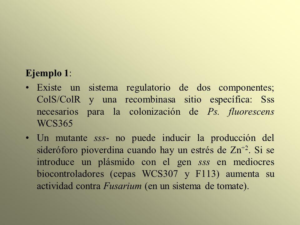 Ejemplo 1: Existe un sistema regulatorio de dos componentes; ColS/ColR y una recombinasa sitio específica: Sss necesarios para la colonización de Ps.