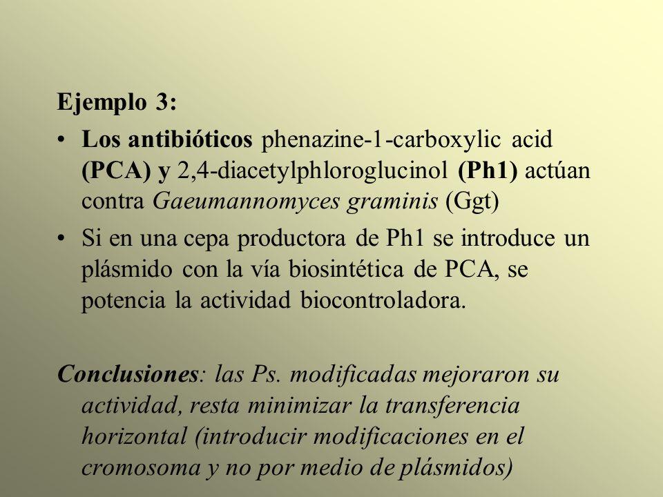 Ejemplo 3: Los antibióticos phenazine-1-carboxylic acid (PCA) y 2,4-diacetylphloroglucinol (Ph1) actúan contra Gaeumannomyces graminis (Ggt) Si en una