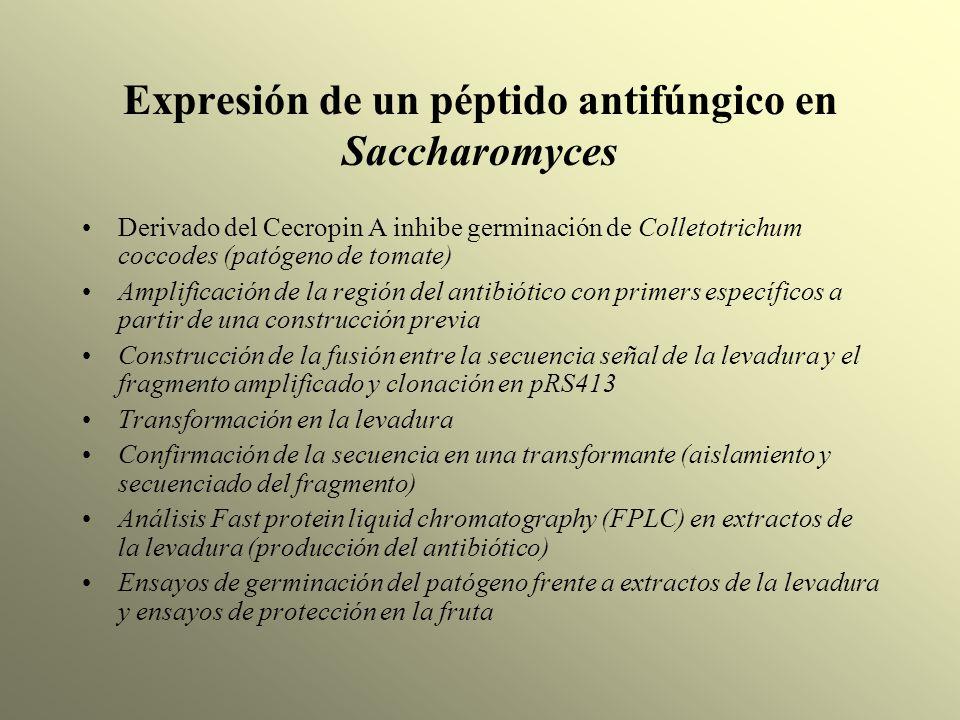 Expresión de un péptido antifúngico en Saccharomyces Derivado del Cecropin A inhibe germinación de Colletotrichum coccodes (patógeno de tomate) Amplif