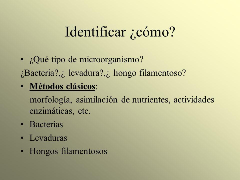 Identificar ¿cómo? ¿Qué tipo de microorganismo? ¿Bacteria?,¿ levadura?,¿ hongo filamentoso? Métodos clásicos: morfología, asimilación de nutrientes, a