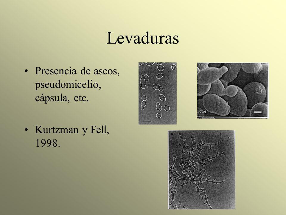 Levaduras Presencia de ascos, pseudomicelio, cápsula, etc. Kurtzman y Fell, 1998.