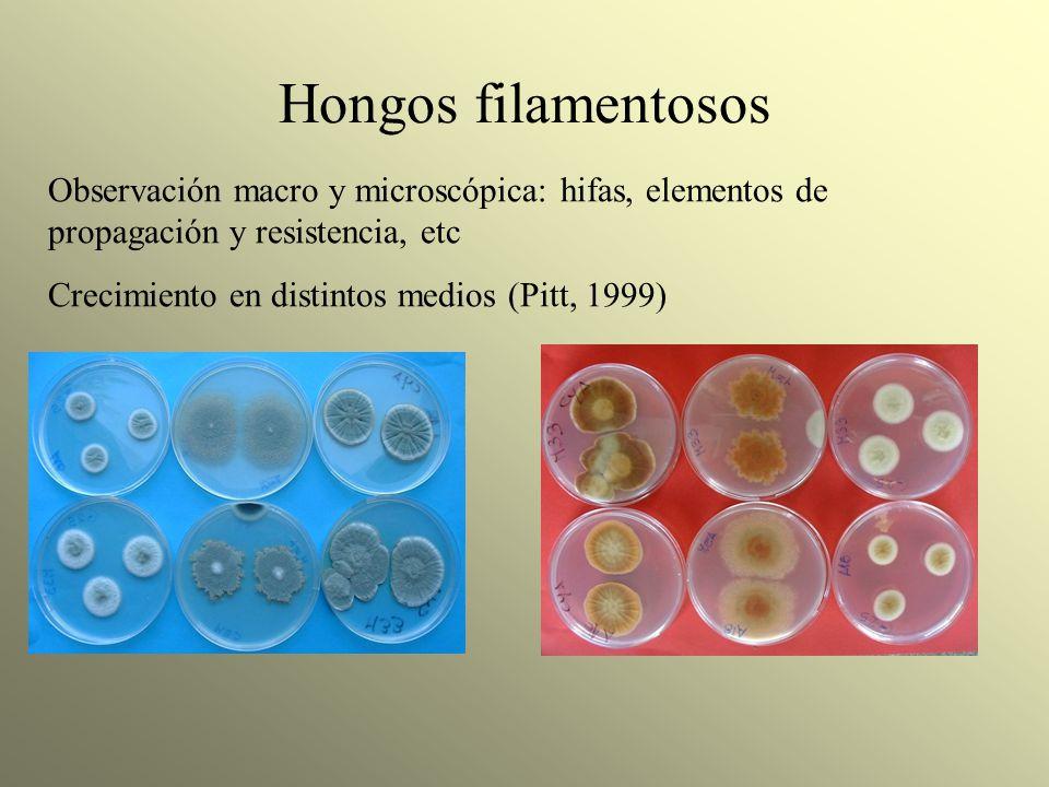 Hongos filamentosos Observación macro y microscópica: hifas, elementos de propagación y resistencia, etc Crecimiento en distintos medios (Pitt, 1999)
